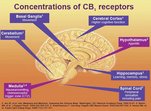 http://theleafonline.com/c/science/2014/06/cannabinoid-profiles-meet-cb-receptors/
